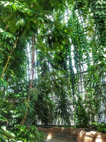 botanischer Garten 1