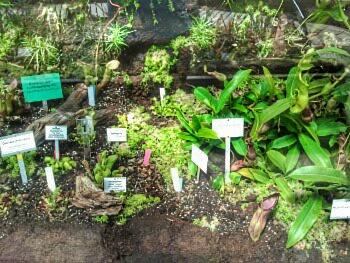 botanischer Garten 6