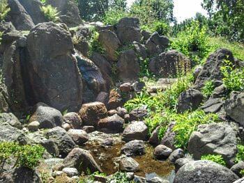 botanischer Garten 8