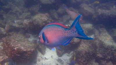 genovesa snorkeling1