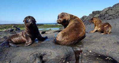 santiago puerto egas baby sea lions