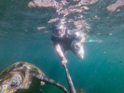 isabela punto vicente roca sea turtle