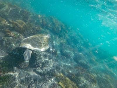 isabela punto vicente roca turtle2
