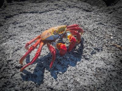 fernandina punta espinoza crabb