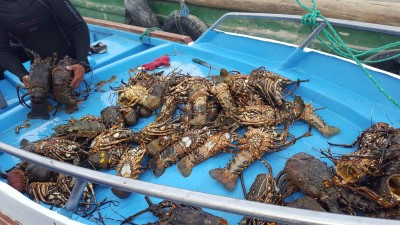isabela puerto villamil lobster
