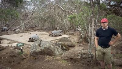 floreana tortoises