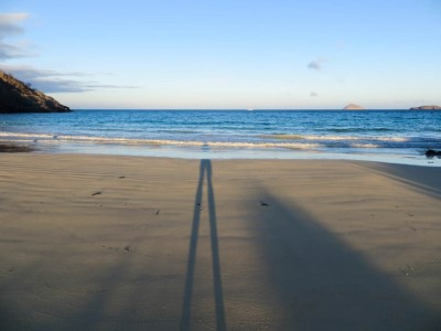 floreana punta cormorant beach1