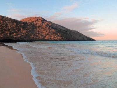 floreana punta cormorant beach2